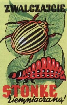 Kill the Colorado beetle! The Soviet dominated Eastern European nations blamed their potato beetle infestation on the United States. Vintage Prints, Vintage Posters, Vintage Photos, Retro Posters, Communist Propaganda, Polish Posters, Scary Funny, Retro 1, Old Toys