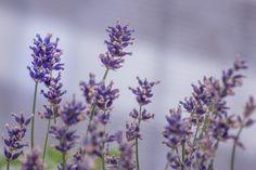 5 plantas que curan las afecciones de la piel - Trucos de belleza caseros