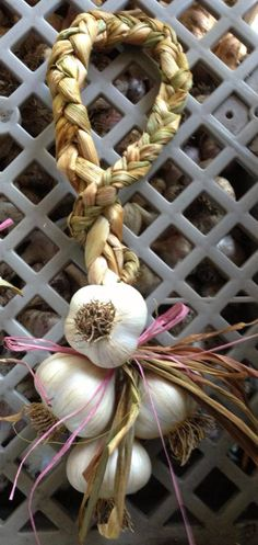 STORAGE Never store garlic in the refrigerator as temperatures of 40-50 F will start premature growth. I believe that garlic is best stored in braids, with some hanging in your kitchen where it is convenient to use. Different strains and varieties of garlic have different storage lives.