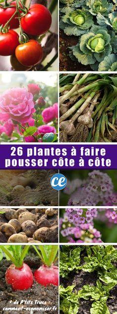 26 Plantes Que Vous Devriez TOUJOURS Faire Pousser CÔTE À CÔTE.
