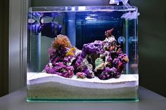 4 gallon pico reef. We used to have a salt tank. I would love to do that again.