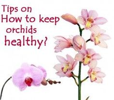 7 detailed tips on how to keep your orchid beautiful and healthy