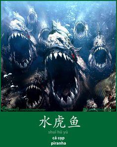 水虎鱼 - shuǐ hǔ yú - cá cọp - Piranha