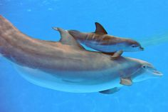 Brookfield Zoo Welcomes New Baby Dolphin (PHOTOS)