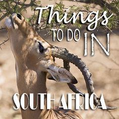 Thinking of traveling to Sunny South Africa? Check out the Top Things to do in South Africa. Kruger National Park Safari, Stuff To Do, Things To Do, Visit South Africa, 10 Top, African Safari, Traveling, Check, Animals