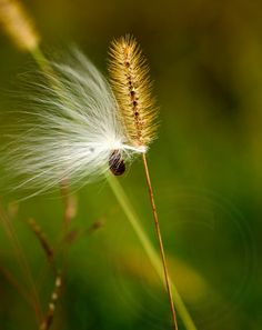 Fluff in the Wind