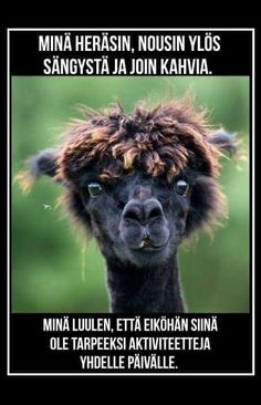 "conflictingheart: "" 10 Alpacas with Hilarious Hair Some animals have gorgeous hair, like the pristine mane of a quarter horse. But what about the alpaca? Alpacas are funny looking animals with their. Funny Animal Faces, Cute Funny Animals, Funny Faces, Alpacas, Funny Pictures Images, Funny Animal Pictures, Bing Images, Camelus, Funny Animal Humor"