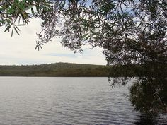 Brown Lake is just one of the many freshwater lakes on North Stradbroke Island. The clear 'tea' colouring of the lake comes from the trees and reeds that surround the lake. Stradbroke Island, The Locals, Fresh Water, Wildlife, River, Explore, Mountains, Colouring, Lakes