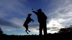 News - Tipp:  http://ift.tt/2A16fvd Hundehalter leben länger #nachrichten