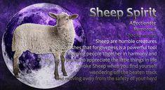 Power Animal, Spirit Guides, Spirit Animal, Sheep, Creatures, Humor, Life, Animals, Animales