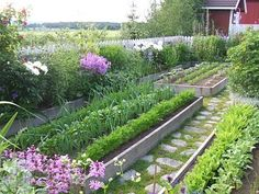 neat raised vegetable beds - loving the stone paver and grass pathway too