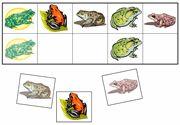 Freebies for concepts sorts & visual discrimination.