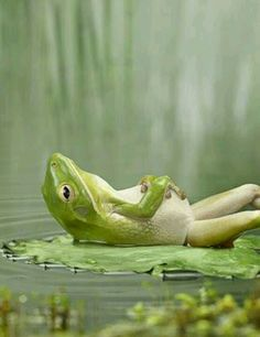 Kfrog is deff like this froggy!