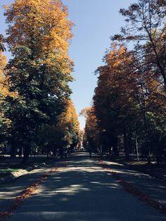 Parcul Central, Cluj Napoca.