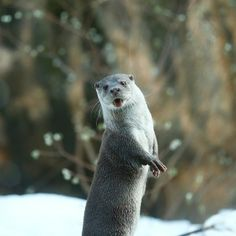Next month's Otter Vogue cover model!