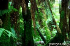 Fireflies dance under the canopy of a magical rainforest. This mystical scene was photographed in the Dandenong Ranges by James Cole. Fireflies, Open Up, Light In The Dark, Canopy, Mystic, Digital Art, My Arts, Photoshop, Window