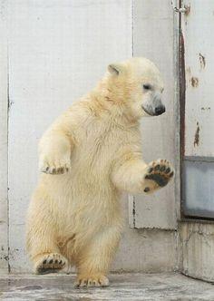 dancing bear 01