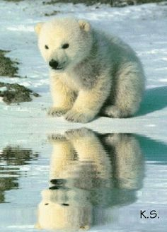 """"""" Hey! Who's that bear in my reflection ?!?!? Imma real boy !!!! """"  Of course you are Georgie . . ."""