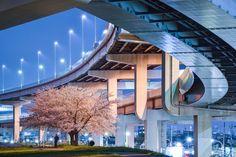 Location : Kohoku, Adachi Ward, Tokyo, Japan (場所:日本国東京都足立区江北). A cherry blossom under the big curve of junction. Like this scene. :) 南側から来た向きに撮ってみました。 ジャンクションのカーブとは自動車が安定して曲がれるようクロソイド曲線に倣って設計されていますが、その理論が桜に対する心遣いを感じます。包み込むように優しく回避していて好きです。 こういうとき望遠の方がいいんですよね、凝縮された感じが好きなんです。