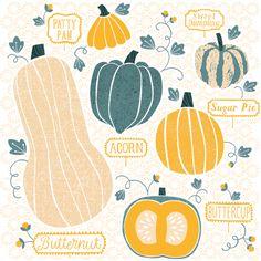 Squash Patch Illustration by Maeve Parker for 2015 Food Calendar. www.maeveparker.com
