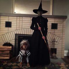 Pin for Later: Seht alle Halloween-Kostüme der Stars Amanda Seyfried als Hexe