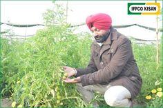 करोड़पति किसान की कहानी-  हम बतायेगे कुरुक्षेत्र के शाहाबाद में रहने वाले किसान हरबीर सिंह के बारे मे उन्होंने मास्टर डिग्री के बाद भी नौकरी  मे दिलचस्पी ना लेकर खेती में कैरियर बनाया और आज हरबीर एक करोड़पति किसान है |हरबीर ने खेती की शुरुआत एक एकड़ से भी कम हिस्से में की थी | एक लाख रु से उन्होंने सब्जियों की नर्सरी लगायी जिससे उन्हें अच्छा मुनाफा हुआ | उसके बाद हरबीर ने और जमीन खरीदी | आज हरबीर ने अपनी मेहनत से 14 एकड़ जमीन पर सब्जियों की नर्सरी लगातें है, जिससे उन्हें करोड़ों का फायदा होता है…