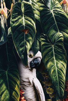 Tiger jungle poster bestellen - - Tiger jungle poster bestellen – Imágenes efectivas que le proporcionamos sobre healthy dinner rec - Tier Wallpaper, Animal Wallpaper, Nature Wallpaper, Animals And Pets, Baby Animals, Cute Animals, Beautiful Birds, Animals Beautiful, Amazing Animals