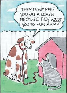 They want the cat to run away :)