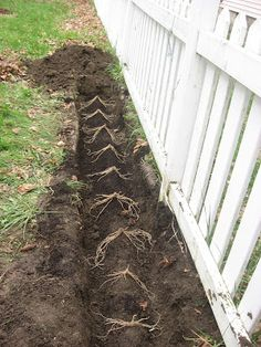 Happy Home: How to Plant Asparagus in your Home Garden