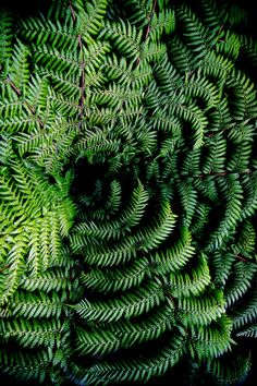 Astrology Signs, Ferns, Cactus Plants, Greenery, Plant Leaves, Fern Gully, Landscape, Abstract, Flowers