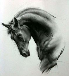 Beautiful pen line on this horse head study
