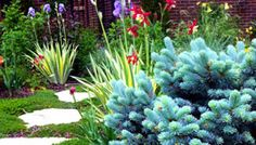 Denver flowering plants and evergreens accent the landscape of a stepping stone path Flowering Plants, Planting Flowers, Stepping Stone Paths, Landscape Services, Landscaping Ideas, Evergreen, Denver, Garden Ideas, Colorado