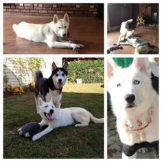 Take a look at Miracle's pictures of before and after.  His throat was slashed and left for dead, but look at him now!