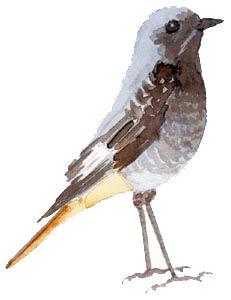 aquarelle du petit oiseau
