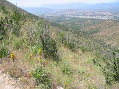 https://flic.kr/p/5jN47z | Orchidaceae - Chloraea gavilu Lindl. | endémica de Chile Lugar: cerro Mauco, V Región