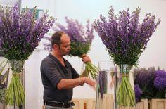 contemporary delphiniums | McQueens florist
