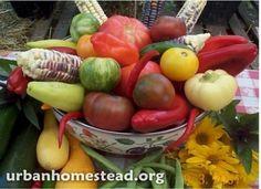 Como cultivar mas de 2700 kg de alimentos en 400 m2-1