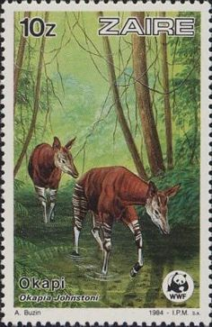 Okapis - Democratic Republic of the Congo