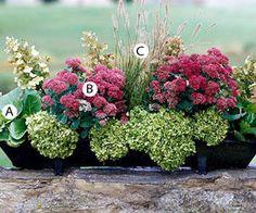 A. Begonia sercowata, 2 szt., B. Rozchodnik Autumn Joy, 2 szt., C. Melinus nerviglumis Pink Crystals, 2 szt.