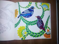 #colouringbook #birds #colorful #foradults #brightcolors #blue #yellow #green #art #fun #artterapy #artistic #amateur #drawing #fulloflife #tropicalparadise #milliemarotta #howtocolor #book #visual #instadraw #instaimage