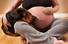 pregnancy pic with pet. We'll see if Milo will do this.
