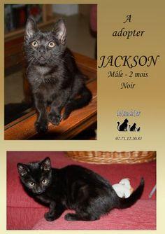 JACKSON (junior) Les Catous du Coeur (Nièvre)
