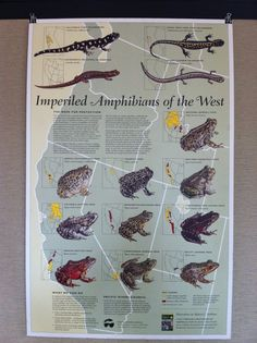 imperiled amphibians