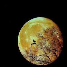 Full Moon... | Luna Llena...