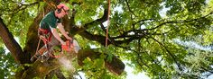 Willow Tree & Landscaping Services experienced and knowledgeable ISA Certified Arborists would be happy to provide professional evaluations and free estimates on all of your needs at your home of tree service in Philadelphia. Our tree services cover everything from removals to health treatments.
