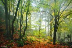 Bavaria, Germany - Photography by Kilian Schönberger Oil Pastel Landscape, Landscape Photography, Nature Photography, Digital Photography, By Kilian, Germany Photography, Hiking Tours, Pine Forest, Depth Of Field