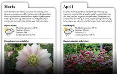 Guide: Smukke planter året rundt