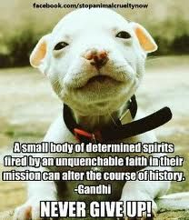 ... /Cute Pitbull Pictures on Pinterest   Pitbulls, Pitbull and Pit Bull