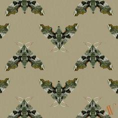 Moth 14 Lime hawk-moth Mimas tiliae (in italics) 30 Day Drawing Challenge, Lime, Hawk Moth, Pretty Cool, Inktober, Drawings, Illustration, Patterns, Whitewash