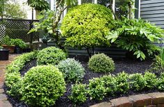 """Mixed topiary balls in different shades (to grow bigger into different sizes / levels)  - grey Corokia """"Geentys Ghost"""", glaucose Teucrium fruticans, green Buxus sempervirens; by HEDGE Garden Design & Nursery"""